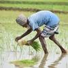 【農業業界が警鐘、野菜等食材の値下がりが起こす影響について】
