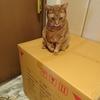 箱の上も好きだけど、やっぱり中が好き!