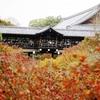 東福寺  木立の中に浮かぶ通天橋(つうてんきょう)