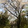 高尾山でお花見のススメ その2