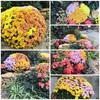 グリンピア春日井のお花の模様替え