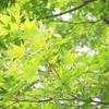 緑がキレイ【皇居東御苑】