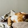 飼い主のでかいくしゃみでイカ耳になる愛猫。