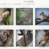 「My 野鳥図鑑」作成。Google画像検索、YouTube野鳥動画図鑑検索付き。
