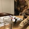 ふち猫を襲う猫