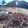 2/25宮島でゴミ拾いやりますよ〜