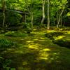 フォトジェニックな苔の名所京都奥嵯峨・祇王寺を訪ねる。平家物語の悲しい女性の物語。