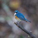 しゃちくの週末鳥撮り日記