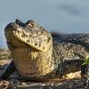 パンタナール・ブラジルの湿原地帯の面白い話