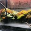 部屋の一角に清涼感。アクアリウムにテラリウム、パルダリウムはいかが?(苔好きの人も必見)Nature Aquarium (Culver city California)