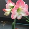 開花から1週間経過!