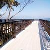 琵琶湖博物館の樹冠トレイルにいってきた!