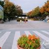 大邱:大邱最高の枯れ秋スポット、達城公園(タルソンゴンウォン)