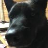 甲斐犬サン、暇を持て余すの巻〜ψ(`∇´)ψヒャハーッ❗️