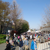 上野恩賜公園~谷中 3月25日の日曜日は、上野恩賜公園は大混雑……