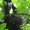 陽明山の鳥たち