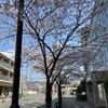 1年に1回の桜の季節。