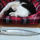 猫の誕生日♪ご馳走でおすすめの食材は?
