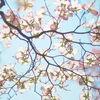 春を通り過ぎて。
