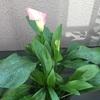 開花から1週間