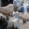子連れ静岡旅行① 熱海・長浜海水浴場~伊豆シャボテン動物公園~駿河湾フェリー