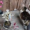 梅と猫と希望