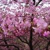 里山ハイキング ~ピンクと黄色の共演~