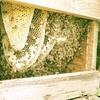 巣箱の増築.    Bienenvölker