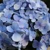 好きな花。