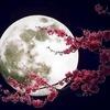 【2020年3月10日スーパームーン乙女座満月】自分を愛し自立する