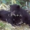 キャンプで熊に会ったら?生存率で見る万が一の対処法