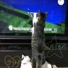 ネコネコゆたんぽ