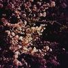 夜桜を見に行きました。