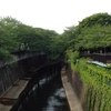石神井川と遊歩道。素晴らしいコンクリートの川