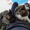 『ネコ』膝上取りゲーム