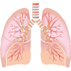 左右合わせて、一つの肺に!岡山大学病院、初の移植成功
