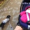 愛犬のお散歩に適したベビーカー選び(本編)
