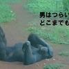 ホノルル動物園の愉快な動物たち
