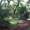 -449- 深沢六丁目開放樹林地