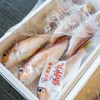 2019年6月28日 小浜漁港 お魚情報