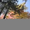高野山の紅葉 Ⅴ