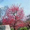 〈池田大作先生 四季の励まし〉 友好拡大の花を爛漫と 2019年3月3日