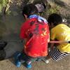 勝手に飼うと罰金⁉️外来ザリガニから日本の生態系を守る規制‼️