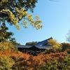 【紅葉散策】東寺・東福寺・京都御所・桂離宮へ【ツワブキの庭】