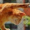 【猫との対話#6】人生の目的に沿った生き方~BeingをDoingに落としこむ方法~