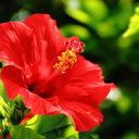 hibiscus920's diary