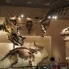 【上野・国立科学博物館】見応えたっぷりな常設展を堪能する。1年半ぶりの再訪。