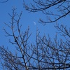 冬枯れの木と月