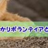 滋賀県 動物愛護団体エンジェルズの『預かりボランティア』とは?