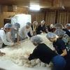 酒造体験 飯沼本家にて麹造りをしてきました